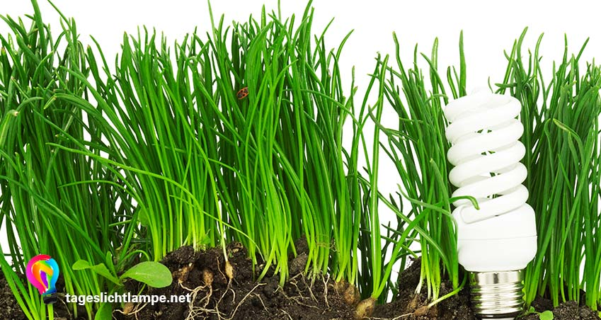 Tageslichtlampe als Pflanzlampe - Leuchtmittel mit Gras, das aus der Erde wächst