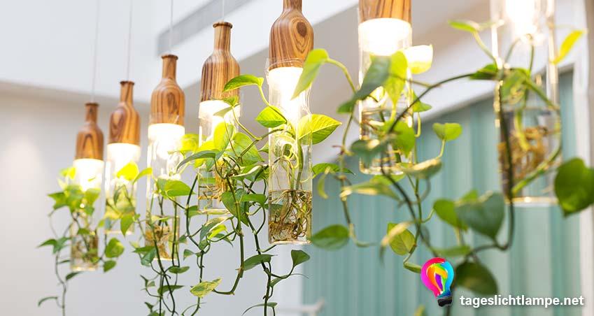 Eine Reihe Tageslichtlampen in Hängelampen mit rankenden Pflanzen, die davon herunter hängen
